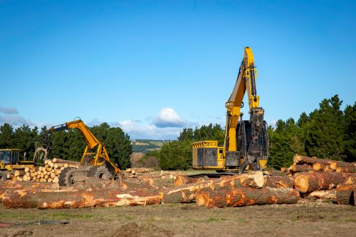 5 Reasons to Hire a Professional for Commercial Logging