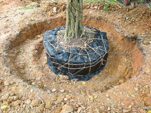 How to Transplant a Tree