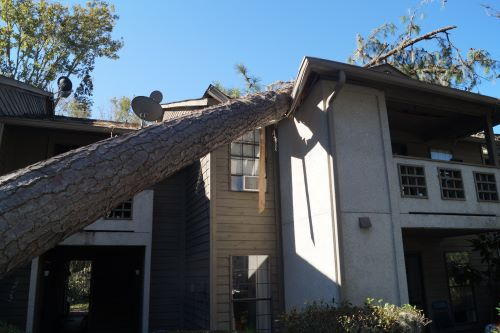 What To Do When a Tree Falls on Your House