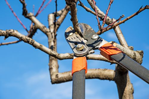 mr-tree-how-do-i-hire-a-tree-pruning-company