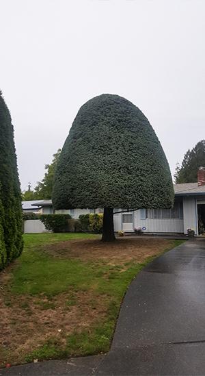 Tree Shaping Portland